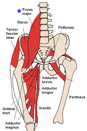 Low Back - \'Every Morning\' Pain - and Deep Muscle (Psoas, etc ...