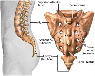 Low Back - 'Every Morning' Pain - and Deep Muscle (Psoas, etc ...