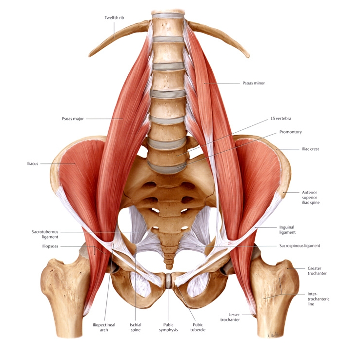 Low Back Every Morning Pain And Deep Muscle Psoas Etc